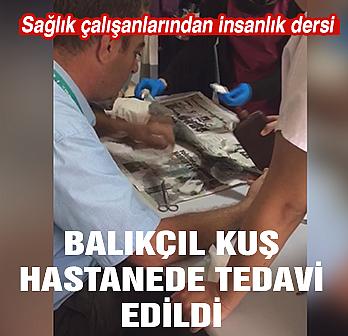 Çankırı'da balıkçıl kuş hastanede tedavi...