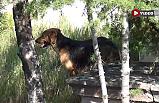 Çankırı'da 5 yavru köpek mezarlıkta ölü bulundu!
