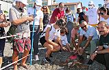 Fethiye'de uydu takip cihazı takılan kaplumbağalar denizle buluştu