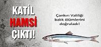 Çankırı Valiliği Tatlıçay'da ki balık ölümlerini doğrulandı!