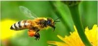 Ilgaz'da arı dehşeti