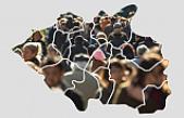 İşte Çankırı'nın yeni nüfusu!