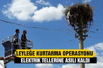 Elektrik teline aslı kalan leyleğe kurtarma operasyon