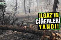 Ilgaz'da 350 dönüm ormanlık alan kül oldu!