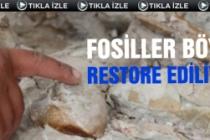 Fosiller böyle restore ediliyor