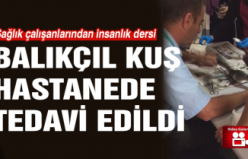 Çankırı'da balıkçıl kuş hastanede tedavi edildi