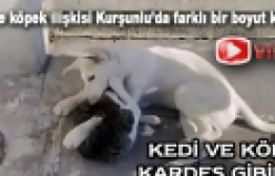 Kurşunlu'da kedi köpek kardeşliği