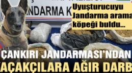 Jandarma detektör köpeği uyuşturucuyu böyle buldu!