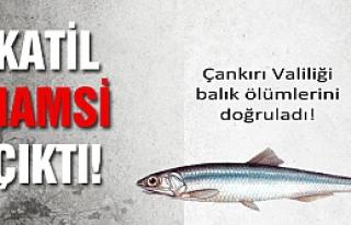 Çankırı Valiliği Tatlıçay'da ki balık ölümlerini...