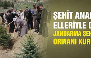 Çankırı'ya Jandarma Şehitler Ormanı kuruldu