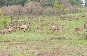 Tabiat parkında yaban hayvanları unutulmadı!