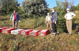 Çankırı'da doğaya 750 keklik salındı!