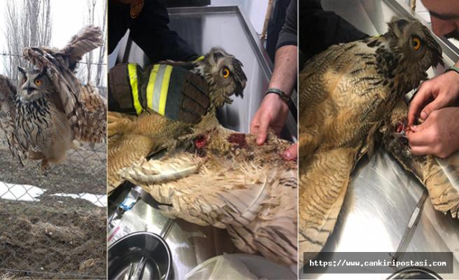 Çankırı İtfaiyesinden Yaralı Baykuş'u Kurtarma Operasyonu