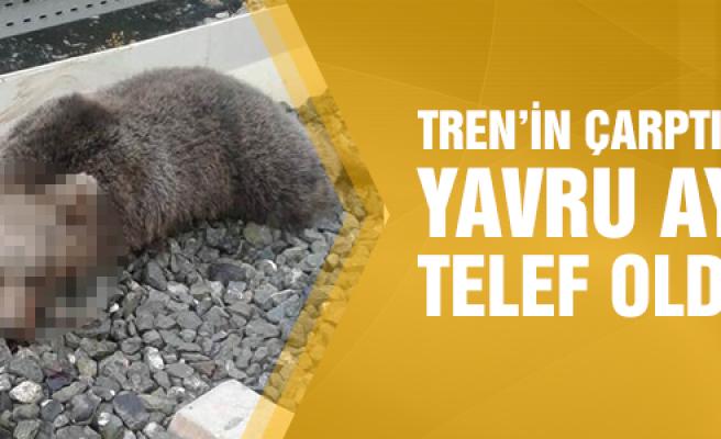 Çankırı'da trenin çarptığı yavru ayı telef oldu
