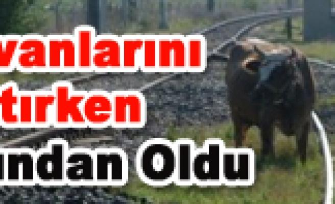 Hayvanlarını Otlatan Vatandaşa Tren Çarptı