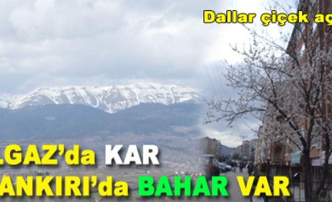 Ilgaz'da kar Çankırı'da bahar var!