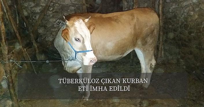 Çankırı'da tüberküloz çıkan kurban eti imha edildi!