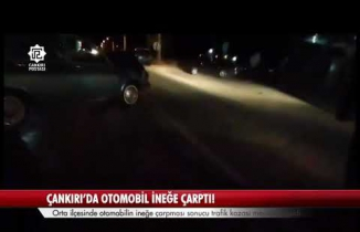 Çankırı'da otomobil ineğe çarptı!