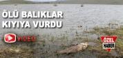 Büyük Gölde Ölü Balıklar Kıyıya Vurdu